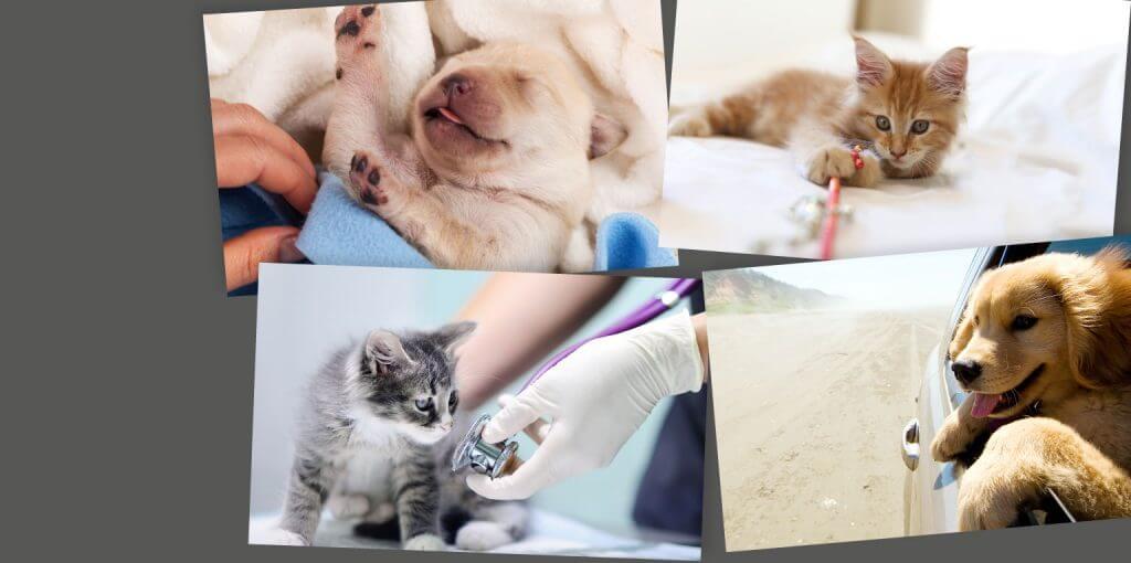 Slide 2 mascotas