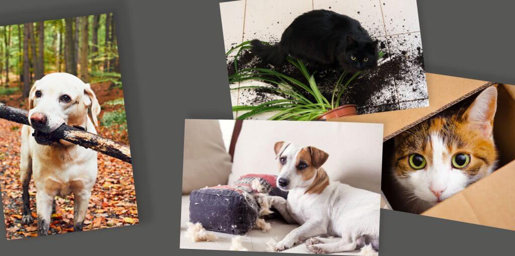 Slide 3 mascotas