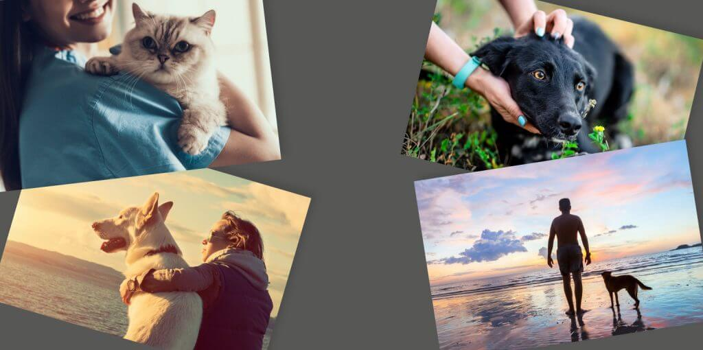 Slide 4 mascotas