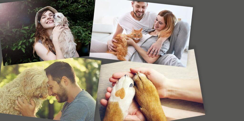 Slide 6 mascotas